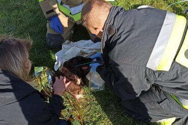 Strażacy ratujący psa